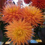 dufftownflowershow2015025